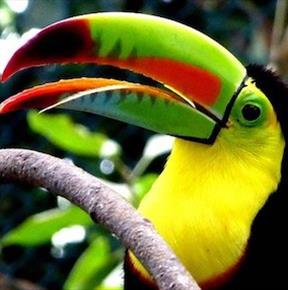 Colombia Tourism routes Toucan