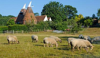 Local Produce Guide for the South East of England