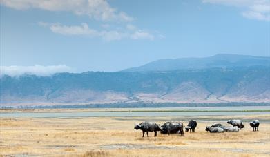 Tourism Satellite Account for Tanzania