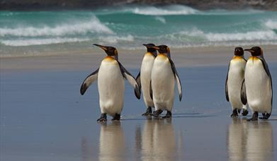 Digital Marketing Strategy and Implementation for the Falkland Islands