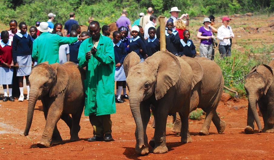 Caring for Elephants at a Sanctuary in Africa