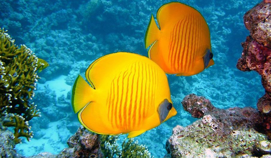 Spain Product Development exotic fish