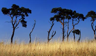 Thetford Forest, The Brecks