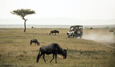 Driving Holidays in Africa