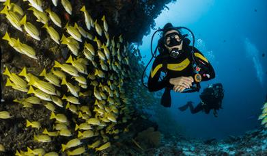 Reef diving with tropical fish