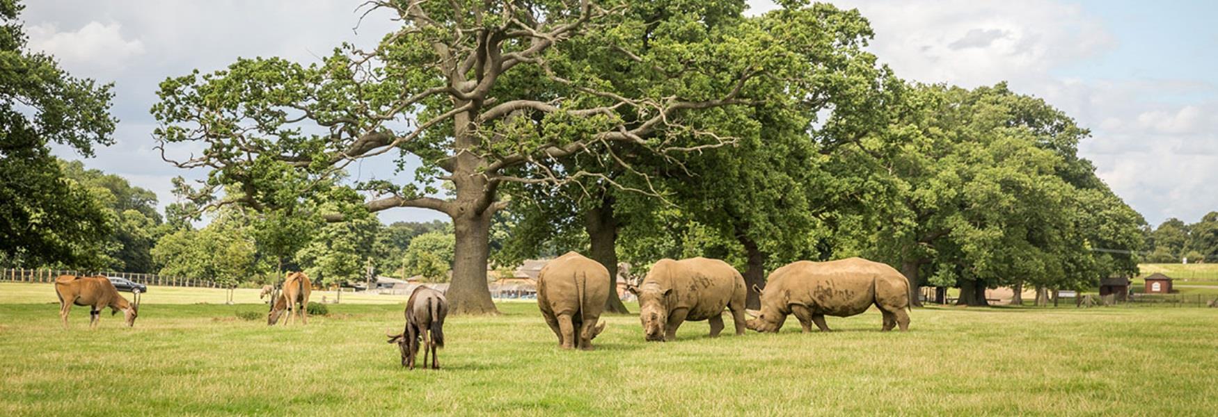 Explore Woburn Safari Park