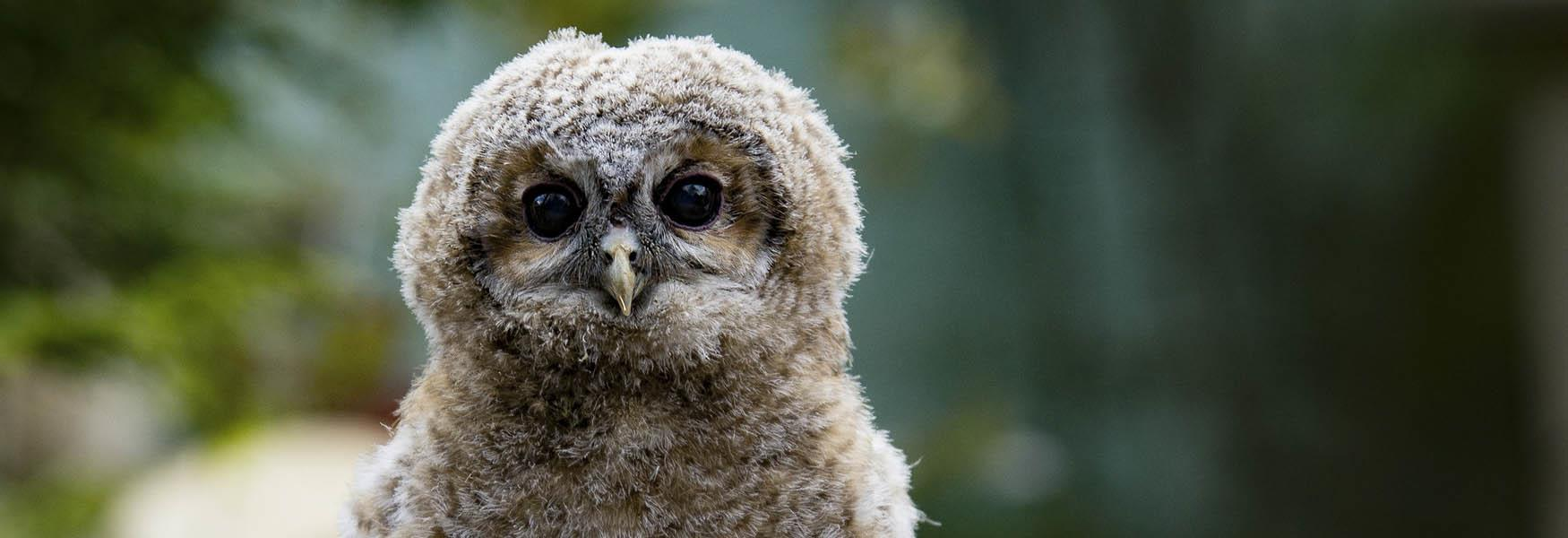 owl attractions