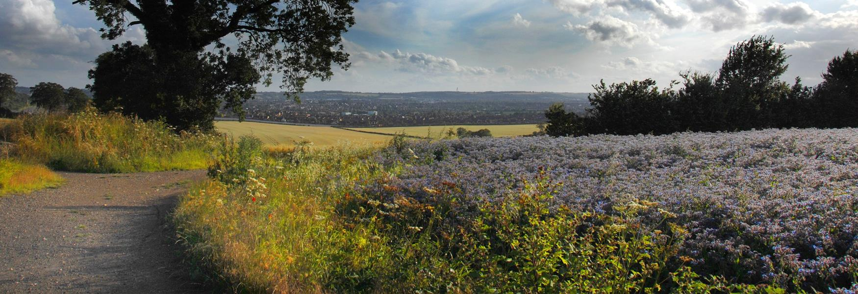 views across luton