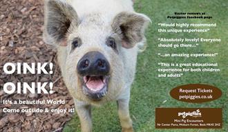 #pigzoo – Petpiggies 'Mini Pig Encounters'