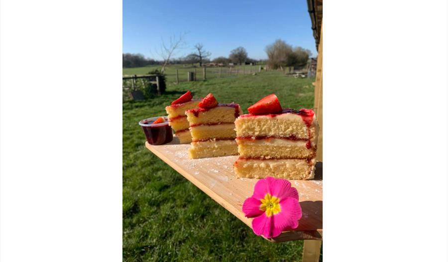 cake in the sunshine