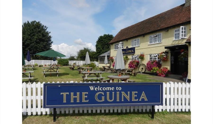 The Guinea