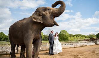 Weddings at Woburn Safari Park