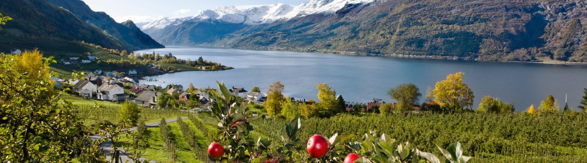 Äpfel aus Hardanger - Norwegens beste