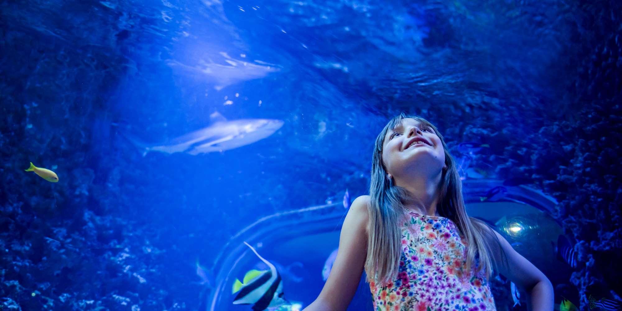 Jente i haitunell på Akvariet