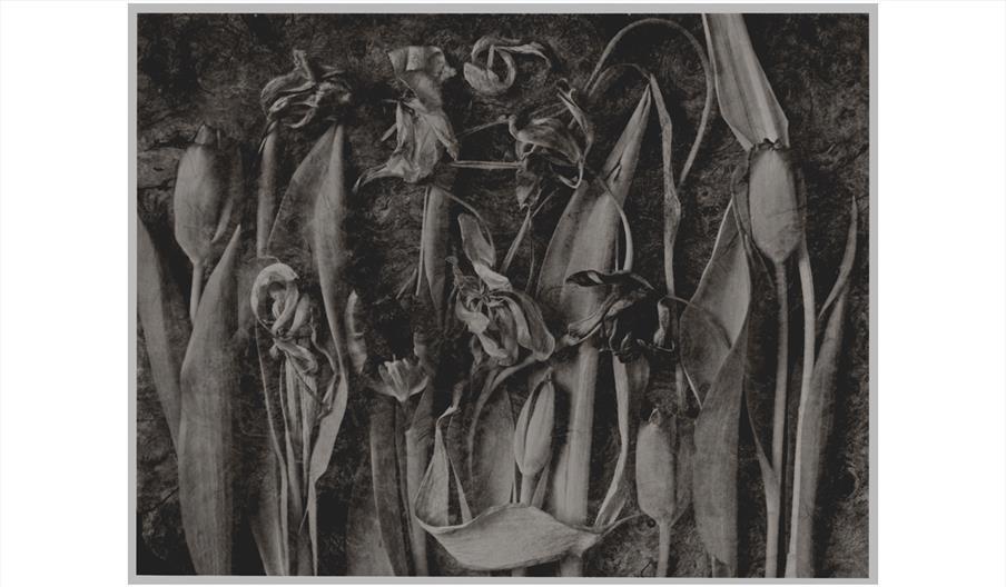 Tulipomania - John Blakemore
