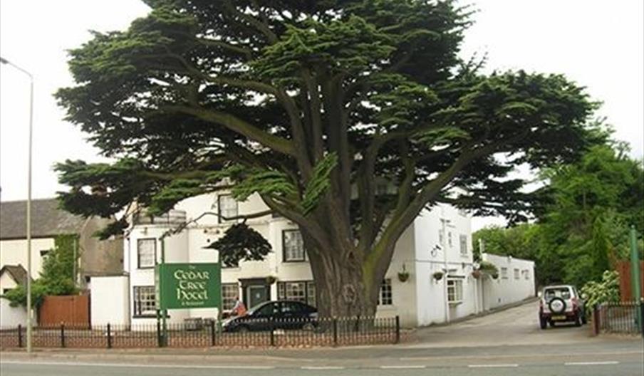 Cedar Tree Hotel