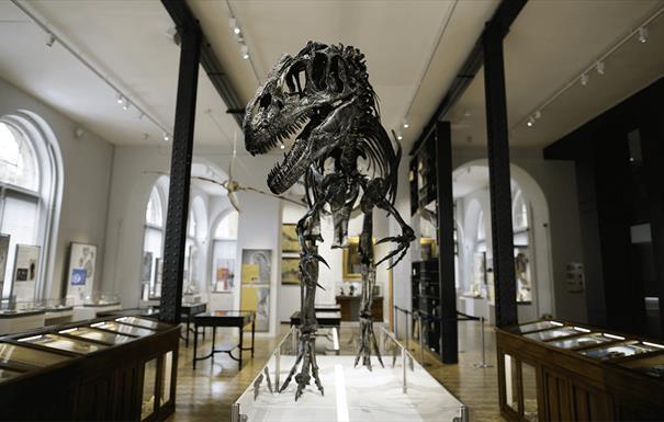 Lapworth Museum of Geology