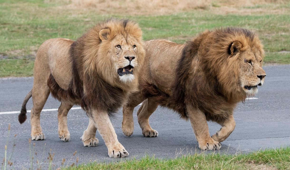 West Midland Safari and Leisure Park