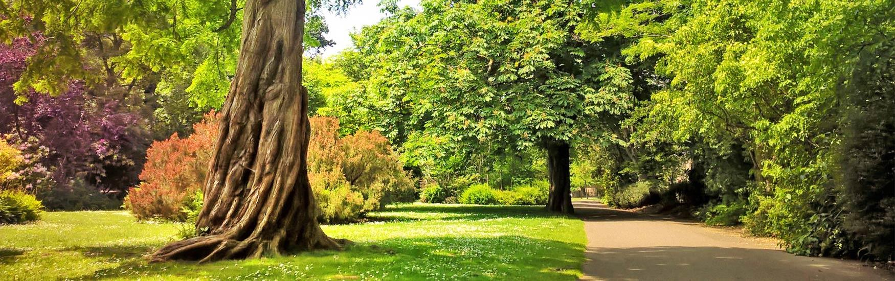 Summer shot of the trees and walkway in Bournemouth Central Gardens