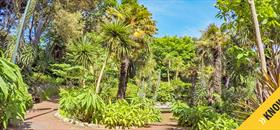 Bournemouth Know Before You Go with palm trees in gardens