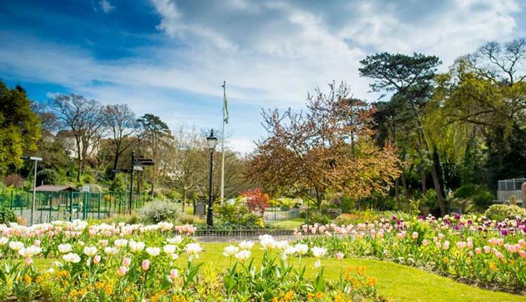 Flowers blooming in Boscombe gardens