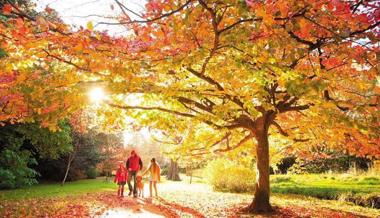 Bournemouth Gardens Tree Trail