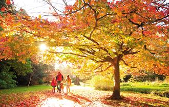Bournemouth Central gardens in autumn with a family walking underneath the trees