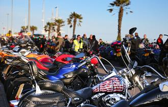 Dream Machines row of bikes along a row of palm trees