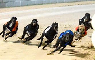 Poole Stadium Greyhounds Racing