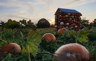 Pumpkin House in field