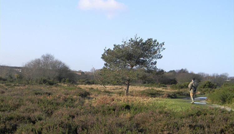 Turbary Common