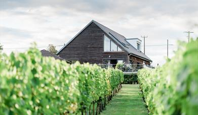 A photo of the vines outside at West Street Vineyard. Photo Courtesy of http://www.gemmagiorgio.com.