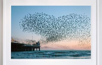 photo of a murmuration over the Pier by Finn Hopson
