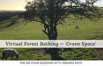 Virtual forest bathing