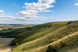 The Scarp, Sussex Downs