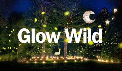Glow Wild