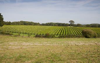 Court Garden - vineyard