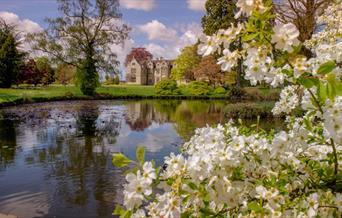 Wakehurst - blossom by pond