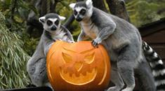 Thumbnail for Halloween in Bristol