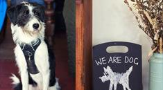 Dog Friendly Places to Eat and Drink in Bristol - credit Paul Box | Dog Friendly