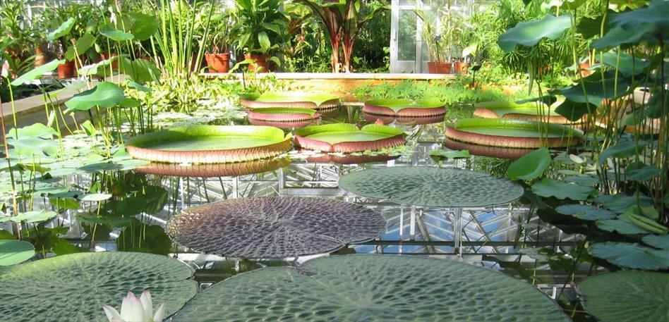 University of Bristol Botanic Gardens Pond