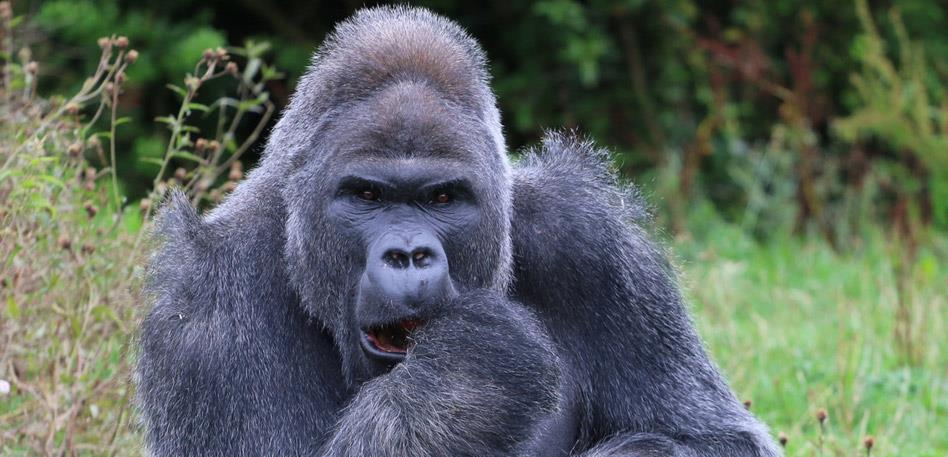 Bristol Zoo Gardens - Image Dave Gott
