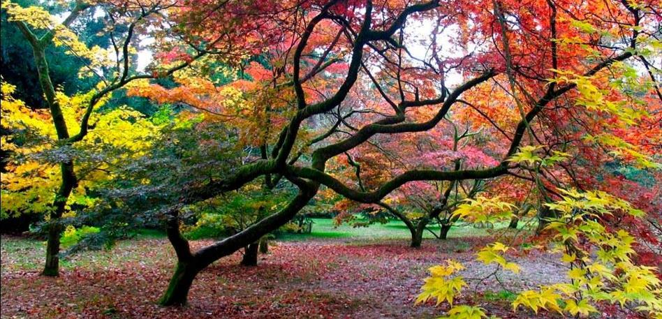 Westonbirt Arboretum Autumn trees
