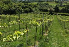 Limeburn Hill Biodynamic Vineyard