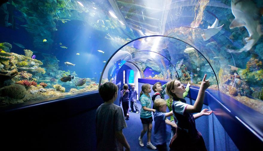 Bristol Aquarium - Visit Bristol
