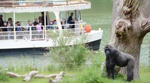 Jungle Cruise at Longleat