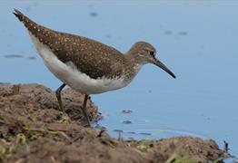 Advanced Birder at Slimbridge Wetland Centre