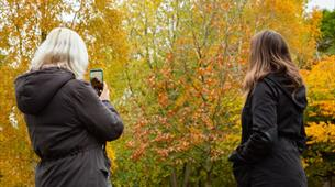 Autumn Wildlife Photography at WWT Slimbridge Wetland Centre