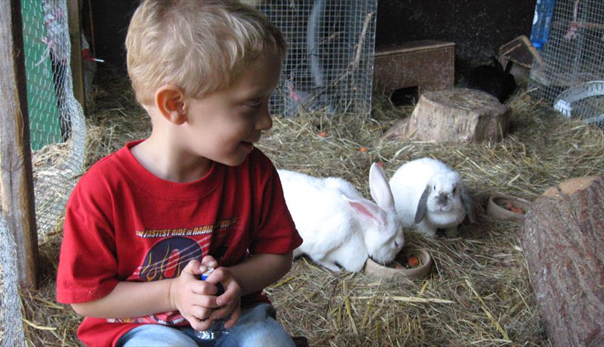 Meet and feed animals at Avon Valley Adventure & Wildlife Park