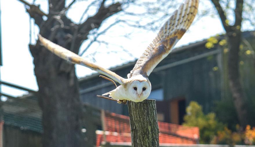 Bird of prey experience at Noah's Ark Zoo Farm